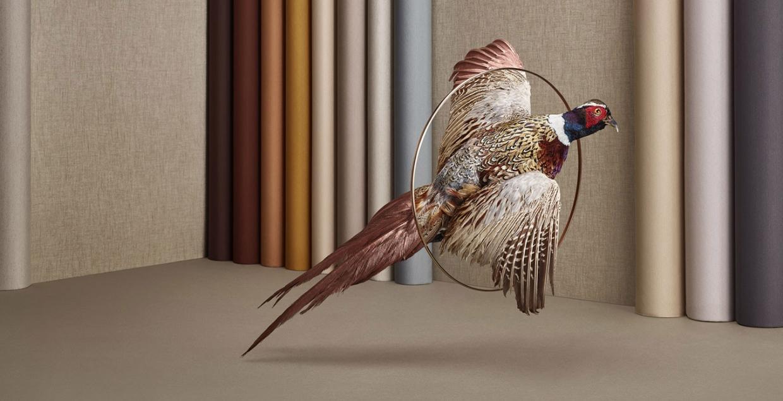 Birduals Scenes design mindsparkle mag