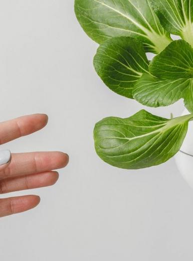 Lettuce Grow Brand Design design identity graphic blog project mindsparkle mag beautiful portfolio